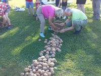 2019 potato picking contest